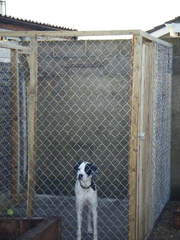 Dog & Cat  Runs / Kennels For Sale