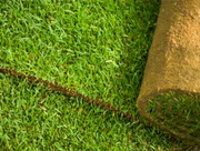 Looking for Lawn Turf in South Dublin - The Lawn Turf Farm